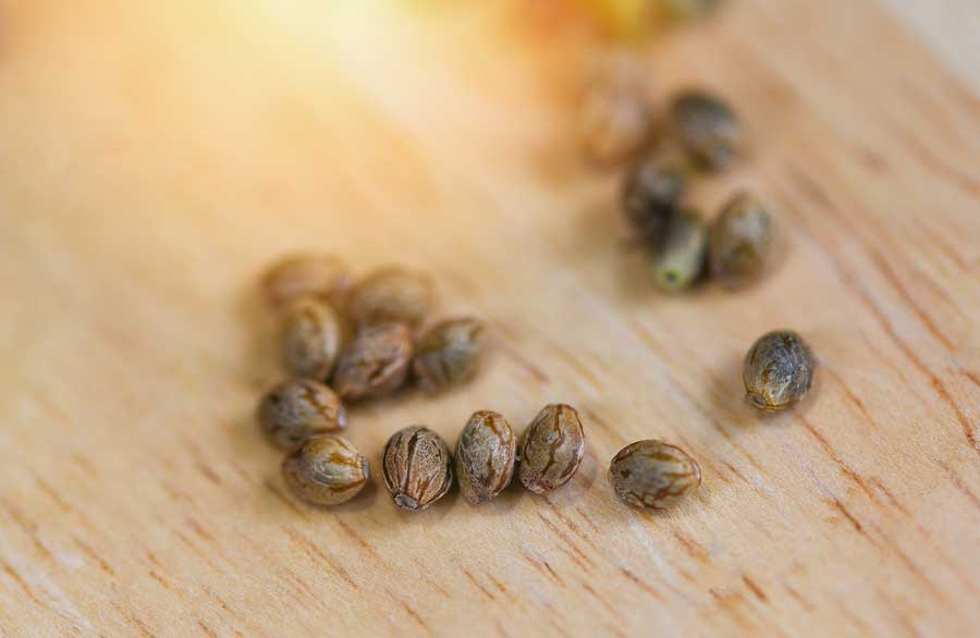 Disadvantages of Feminized Seeds
