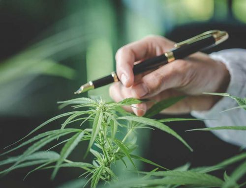 Marijuana Boron Deficiency – How to Cure your Feminized Marijuana Plants?