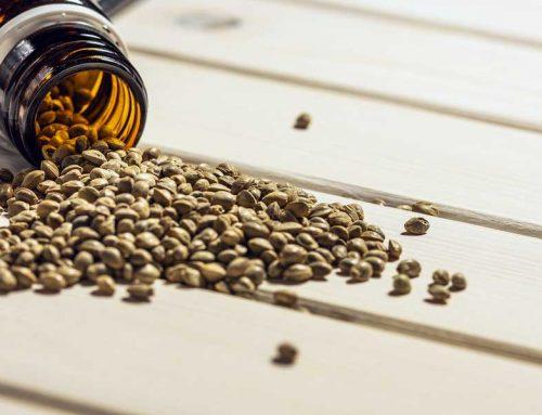 Can You Buy Marijuana Seeds in Canada?