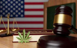 Legal Marijuana vs Privately Grown